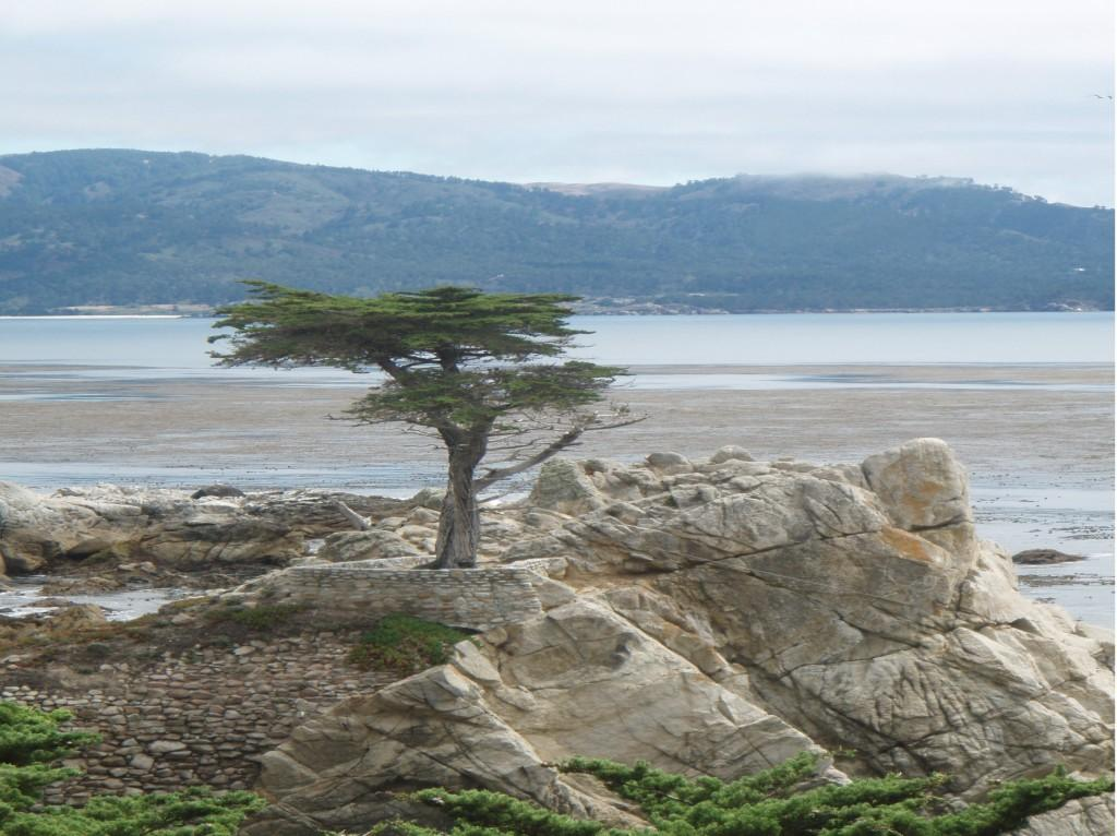 Lone Cypress- When Cojigas traveled to California in the summer of 2008, she captured this tree, known as the official trademark of Pebble Beach.