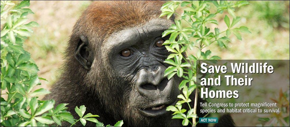 the-wildlife-conservation-society