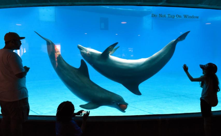 The National Baltimore Aquarium: Are aquariums ethical?