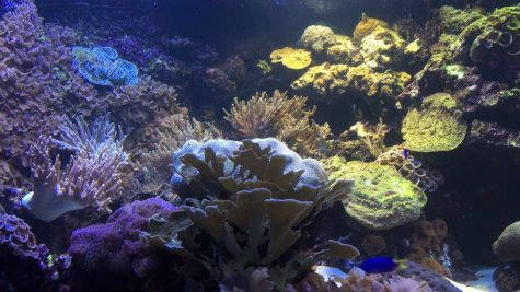The National Baltimore Aquarium: A Taste of the World's Sea Life