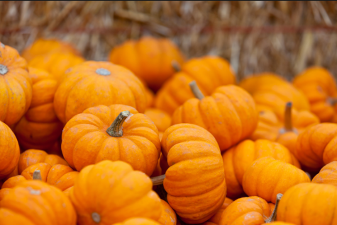 National Pumpkin Day slowly gains popularity, especially via social media