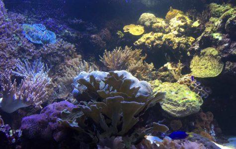 The National Baltimore Aquarium: A Taste of the World's Sea Life